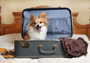 Размещение в отеле с животным